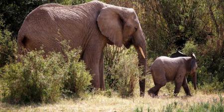 """أنثى فيل تقتل موظفا بحديقة الحيوانات """"بضربة واحدة"""""""